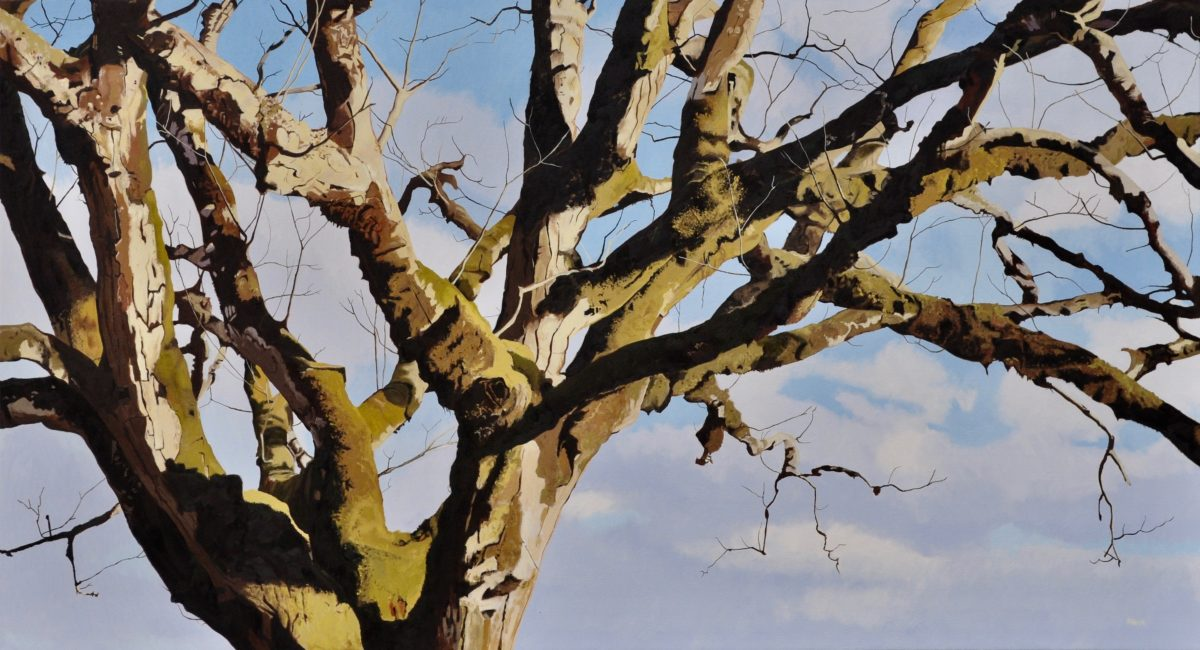 Big Tree, oil on canvas, 36x66